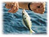 Malinco Fishing Marine Wire | Marine Wire